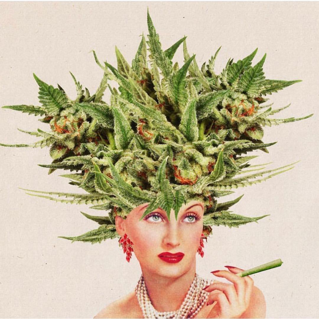 cbd oil womens health cannabis Seedella
